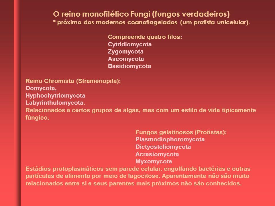 O reino monofilético Fungi (fungos verdadeiros)