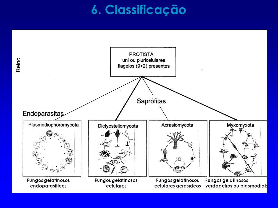 6. Classificação Fungos gelatinosos endoparasíticos celulares