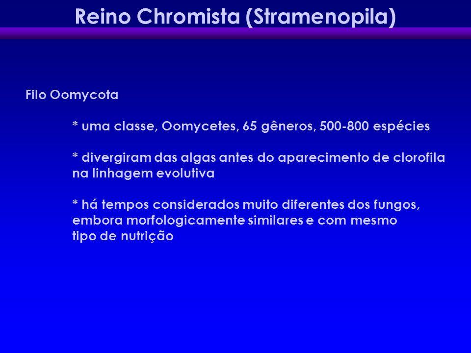 Reino Chromista (Stramenopila)