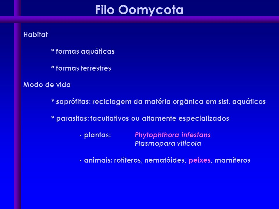 Filo Oomycota Habitat * formas aquáticas * formas terrestres