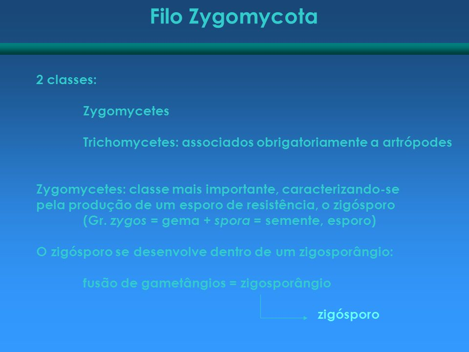 Filo Zygomycota 2 classes: Zygomycetes