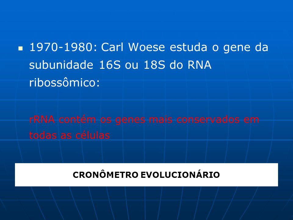 Whittaker, 1969 Estrutura celular: eucarionte e procarionte