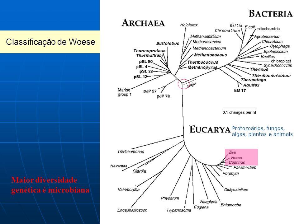 A análise genética levou a propor o estabelecimento dos super-reinos ou domínios