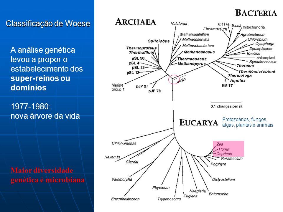 1970-1980: Carl Woese estuda o gene da subunidade 16S ou 18S do RNA ribossômico: