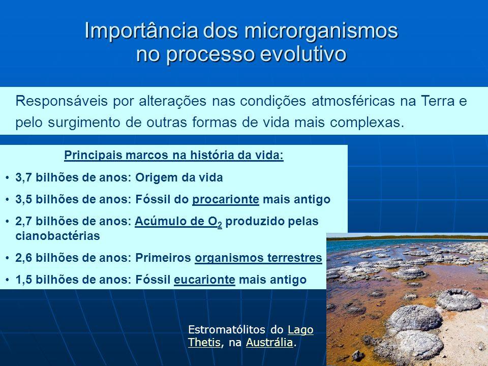 O que são microrganismos