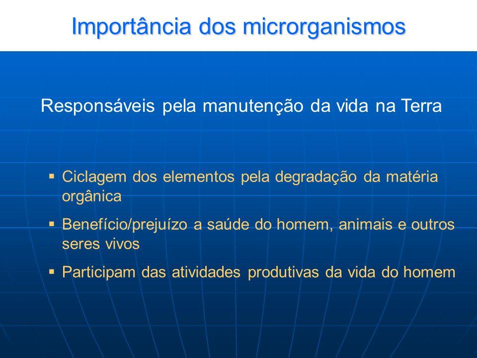 Importância dos microrganismos no processo evolutivo