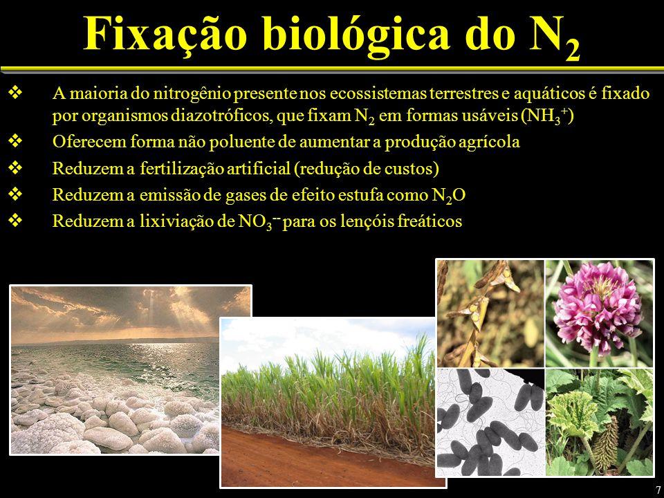 Fixação biológica do N2