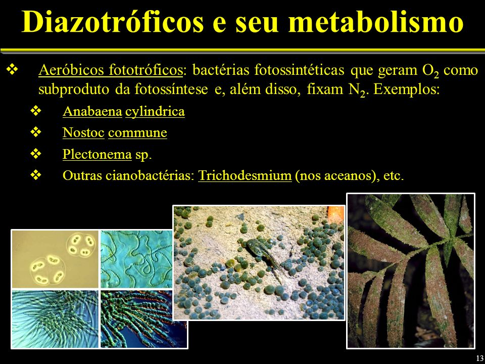 Diazotróficos e seu metabolismo