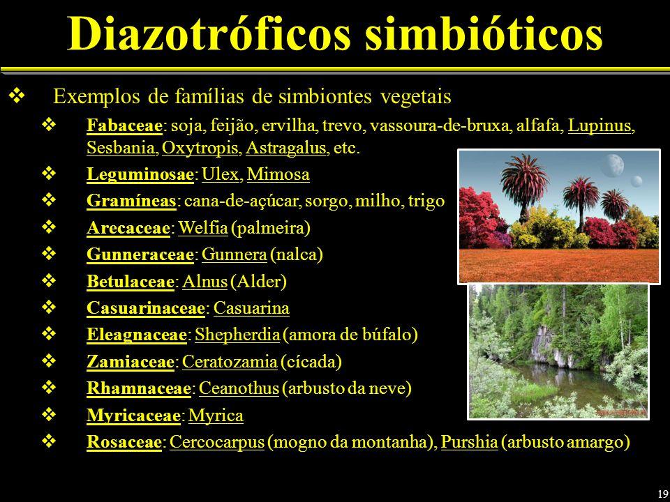 Diazotróficos simbióticos