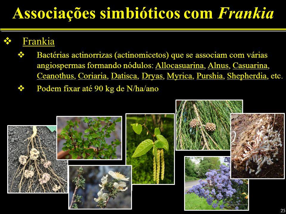 Associações simbióticos com Frankia