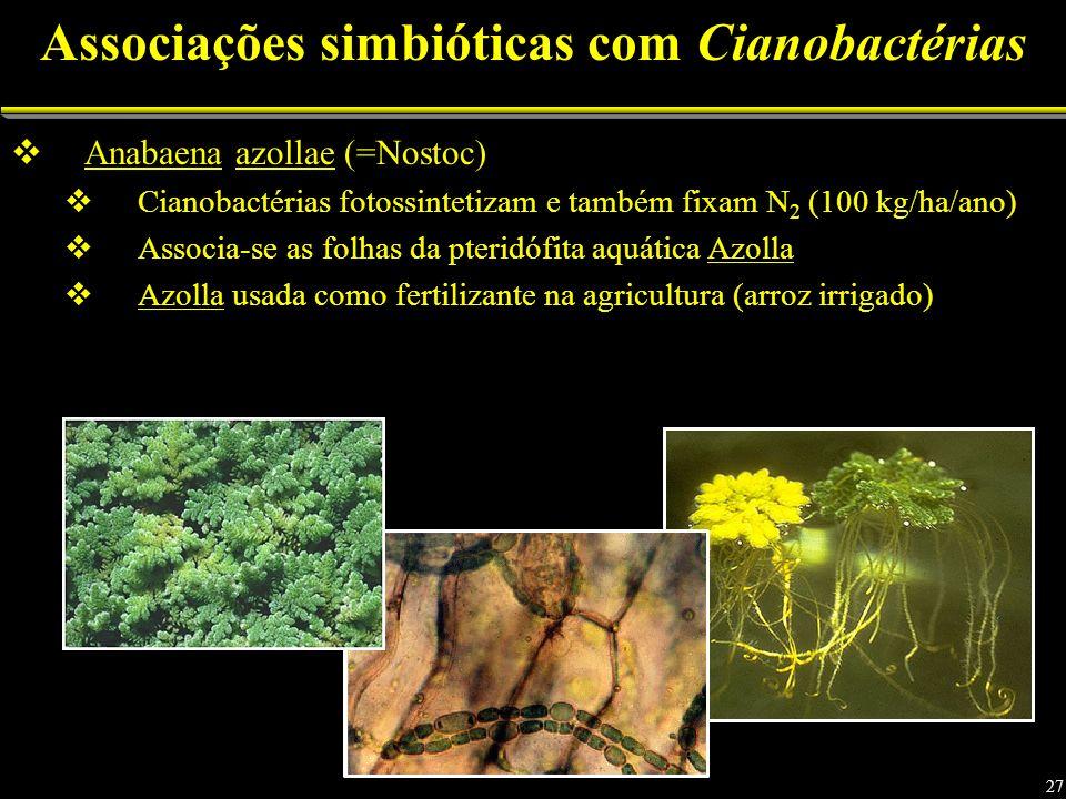 Associações simbióticas com Cianobactérias