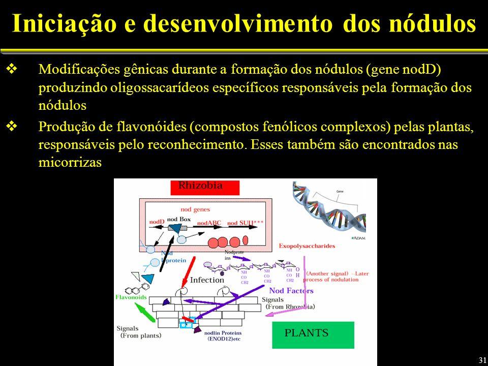 Iniciação e desenvolvimento dos nódulos