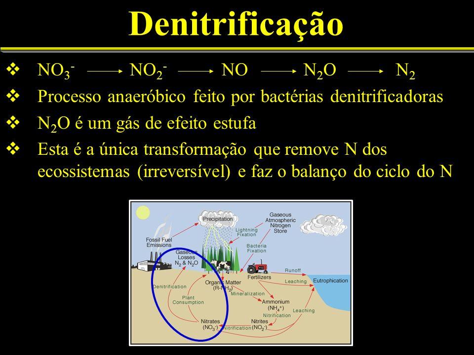 Denitrificação NO3- NO2- NO N2O N2