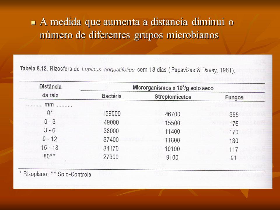 A medida que aumenta a distancia diminui o número de diferentes grupos microbianos