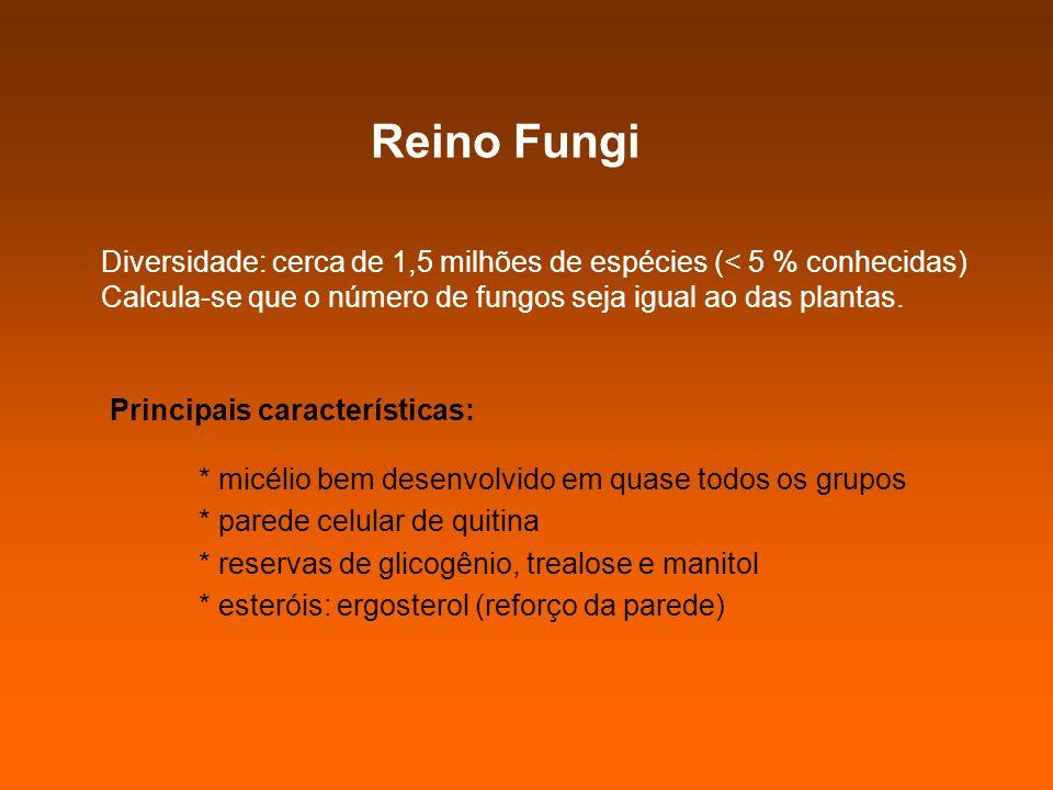 Reino Fungi Diversidade: cerca de 1,5 milhões de espécies (< 5 % conhecidas) Calcula-se que o número de fungos seja igual ao das plantas.