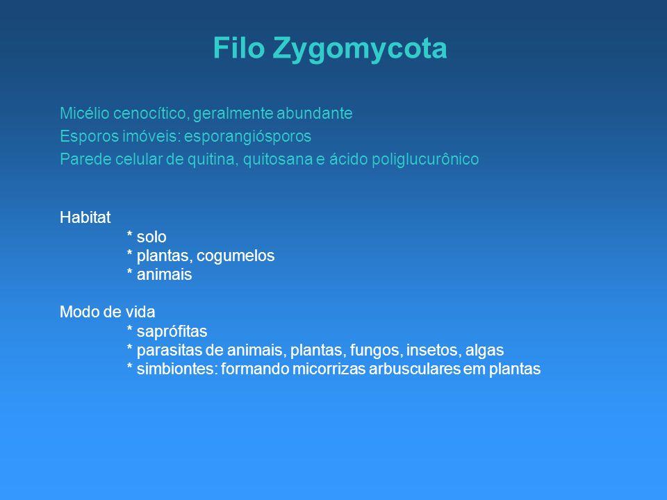 Filo Zygomycota Micélio cenocítico, geralmente abundante