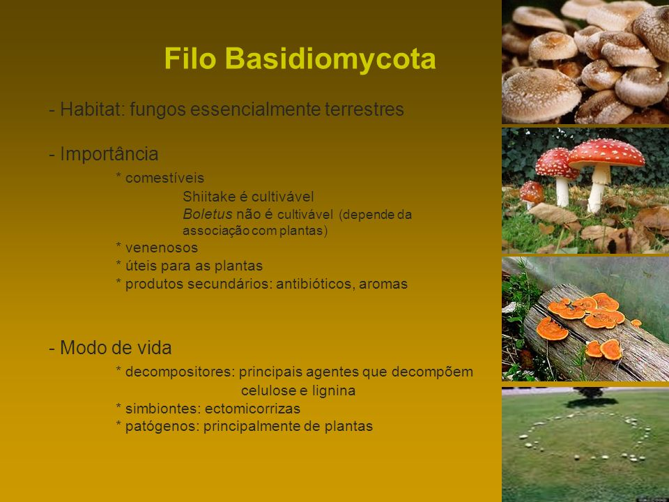 Filo Basidiomycota - Habitat: fungos essencialmente terrestres