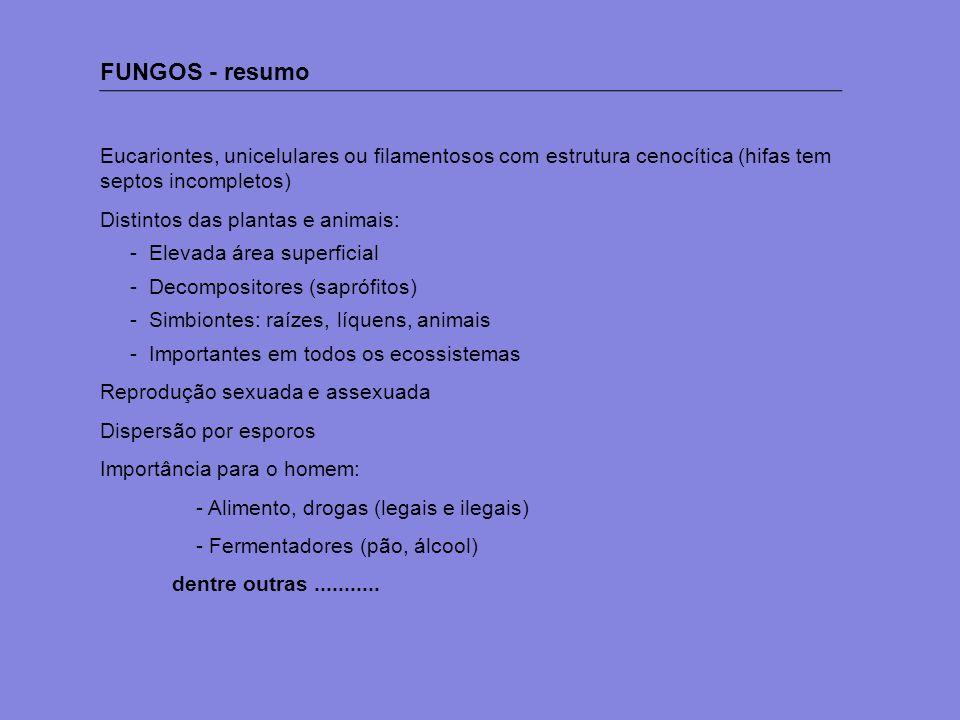 FUNGOS - resumo Eucariontes, unicelulares ou filamentosos com estrutura cenocítica (hifas tem septos incompletos)