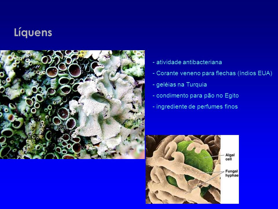 Líquens - atividade antibacteriana