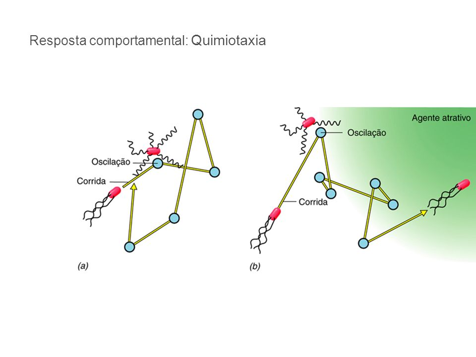 Resposta comportamental: Quimiotaxia