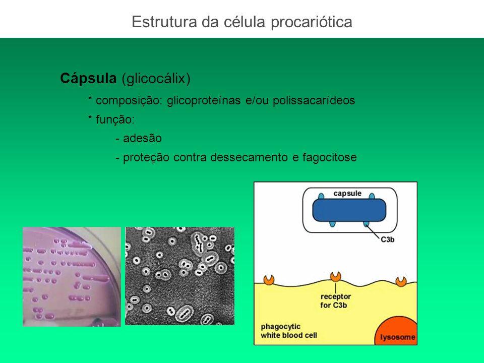 Estrutura da célula procariótica