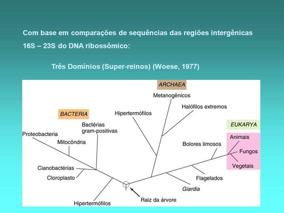 Com base em comparações de sequências das regiões intergênicas