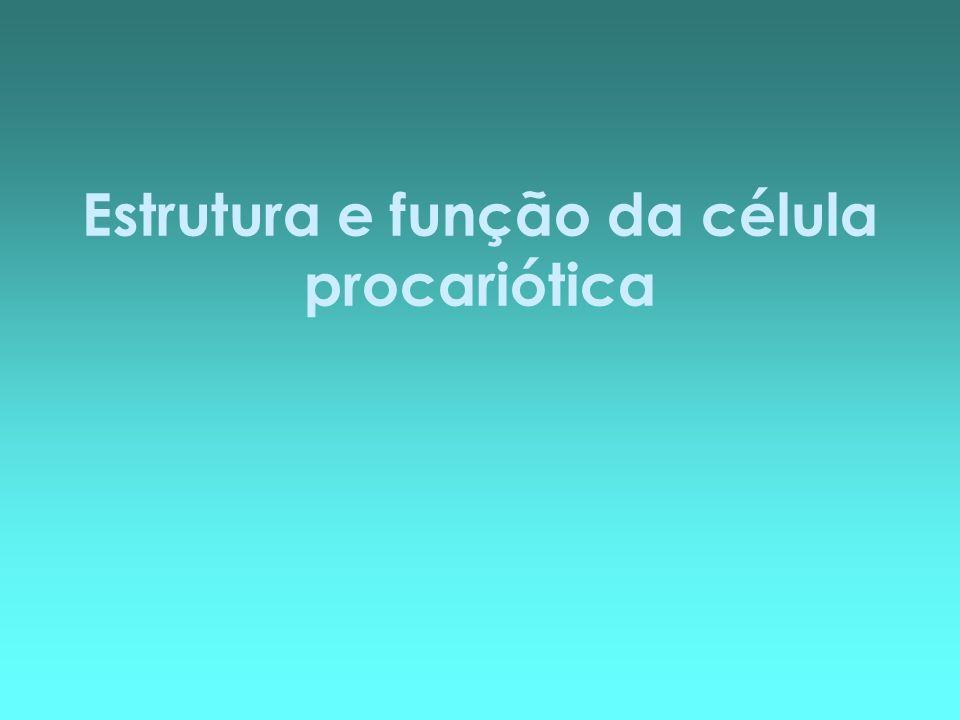 Estrutura e função da célula procariótica