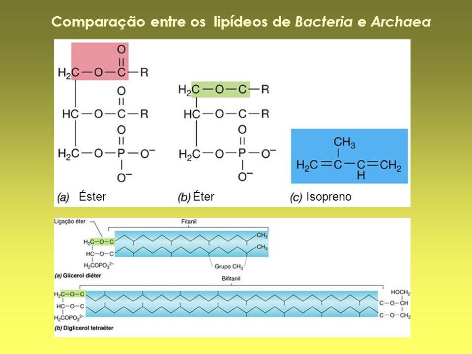 Comparação entre os lipídeos de Bacteria e Archaea