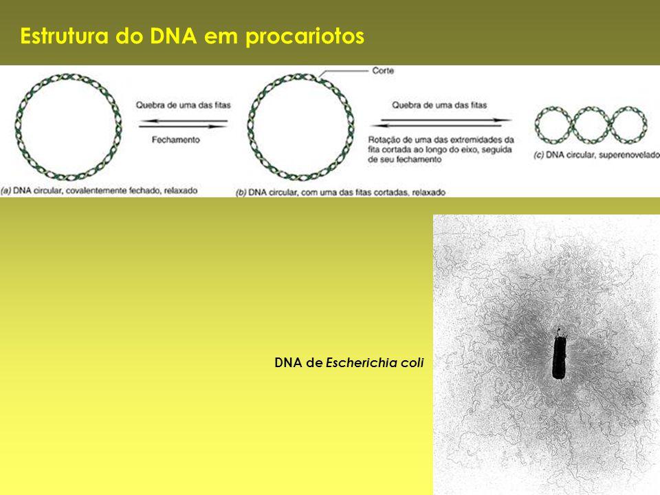 Estrutura do DNA em procariotos