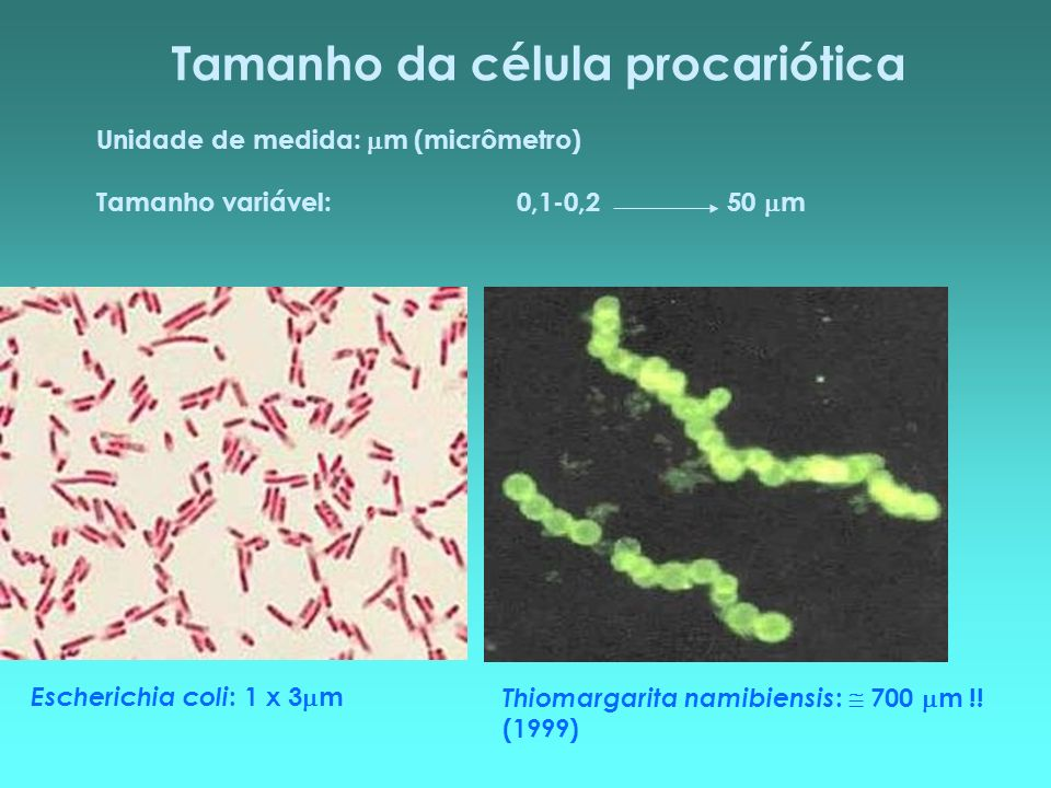 Tamanho da célula procariótica