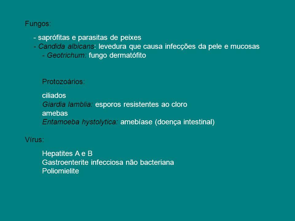 Fungos: - saprófitas e parasitas de peixes. - Candida albicans: levedura que causa infecções da pele e mucosas.