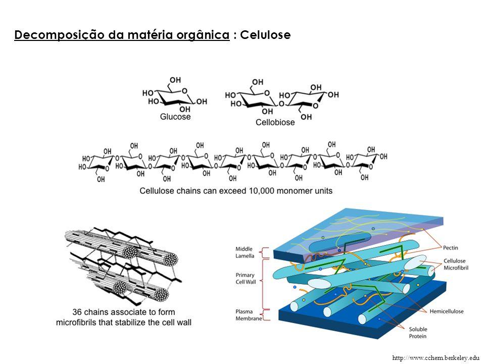 Decomposição da matéria orgânica : Celulose