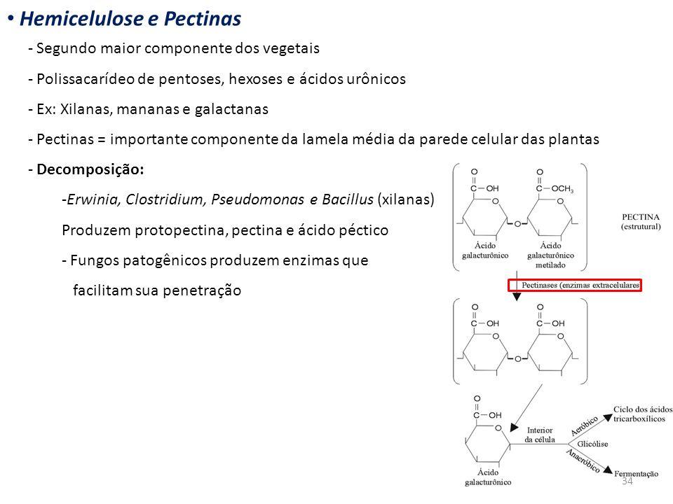 Hemicelulose e Pectinas