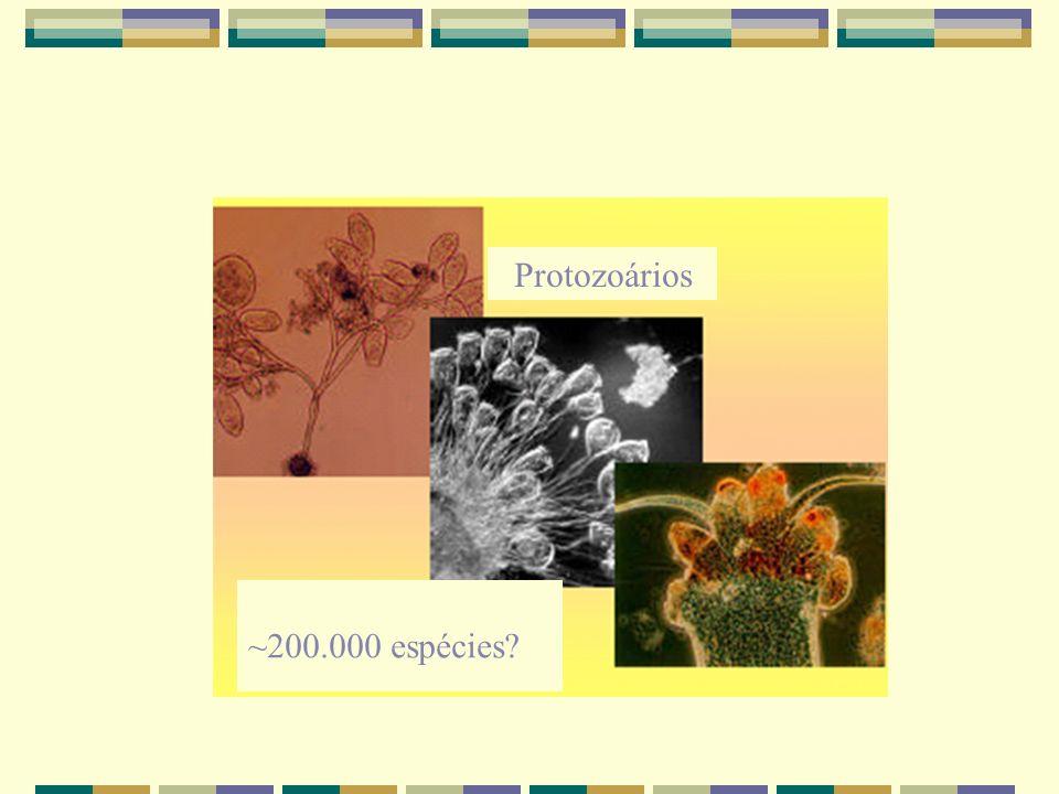 Protozoários ~200.000 espécies