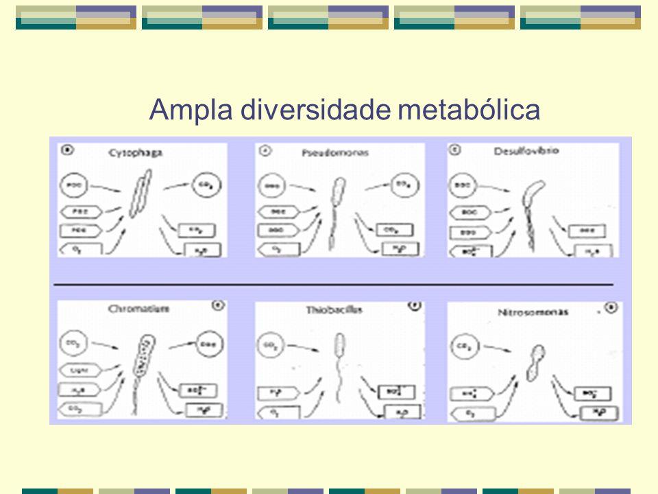 Ampla diversidade metabólica