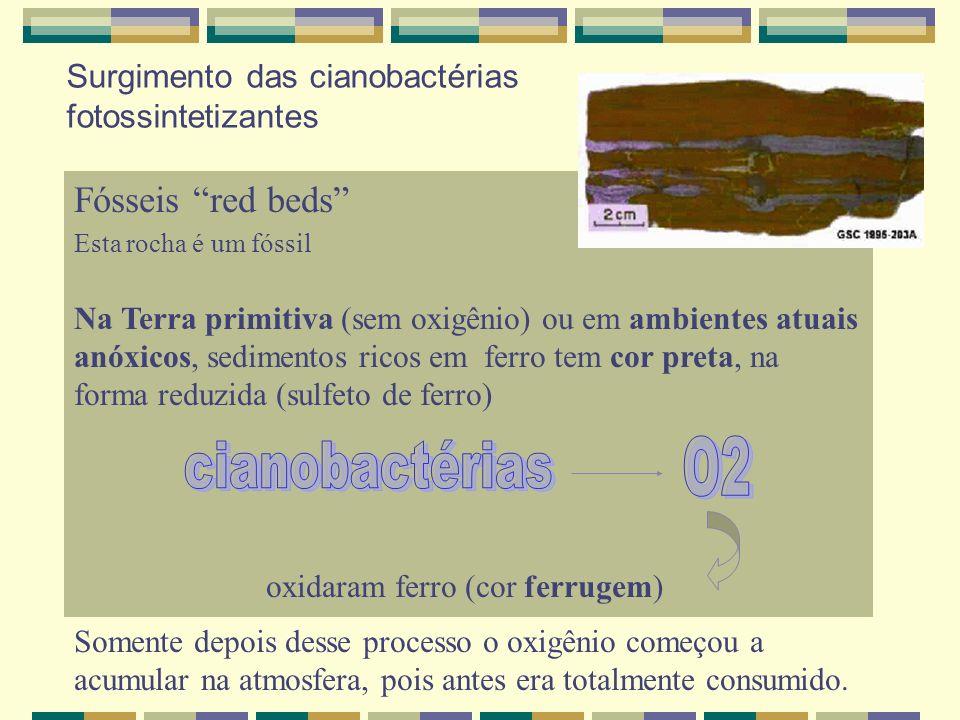 O2 cianobactérias Fósseis red beds