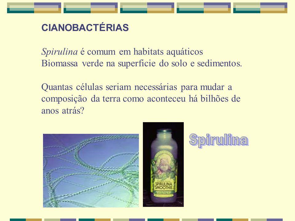 Spirulina CIANOBACTÉRIAS Spirulina é comum em habitats aquáticos