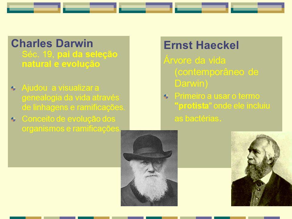 Charles Darwin Séc. 19, pai da seleção natural e evolução
