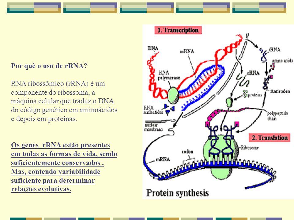 Por quê o uso de rRNA