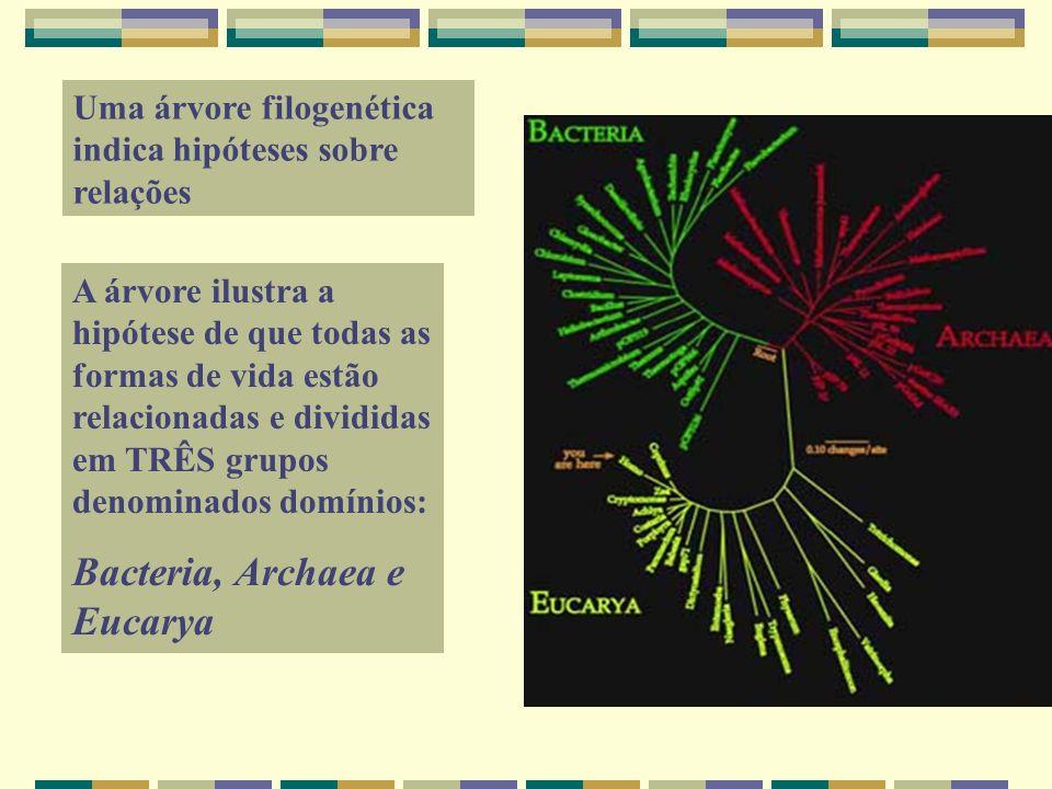 Bacteria, Archaea e Eucarya