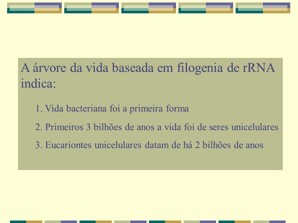 A árvore da vida baseada em filogenia de rRNA indica: