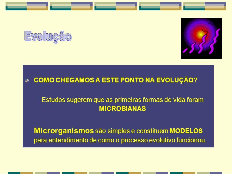 Estudos sugerem que as primeiras formas de vida foram MICROBIANAS
