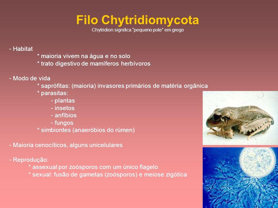 Chytridion significa pequeno pote em grego