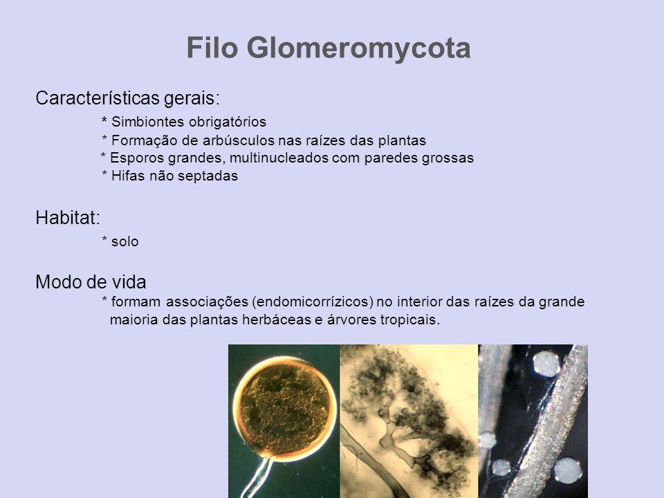Filo Glomeromycota Características gerais: * Simbiontes obrigatórios