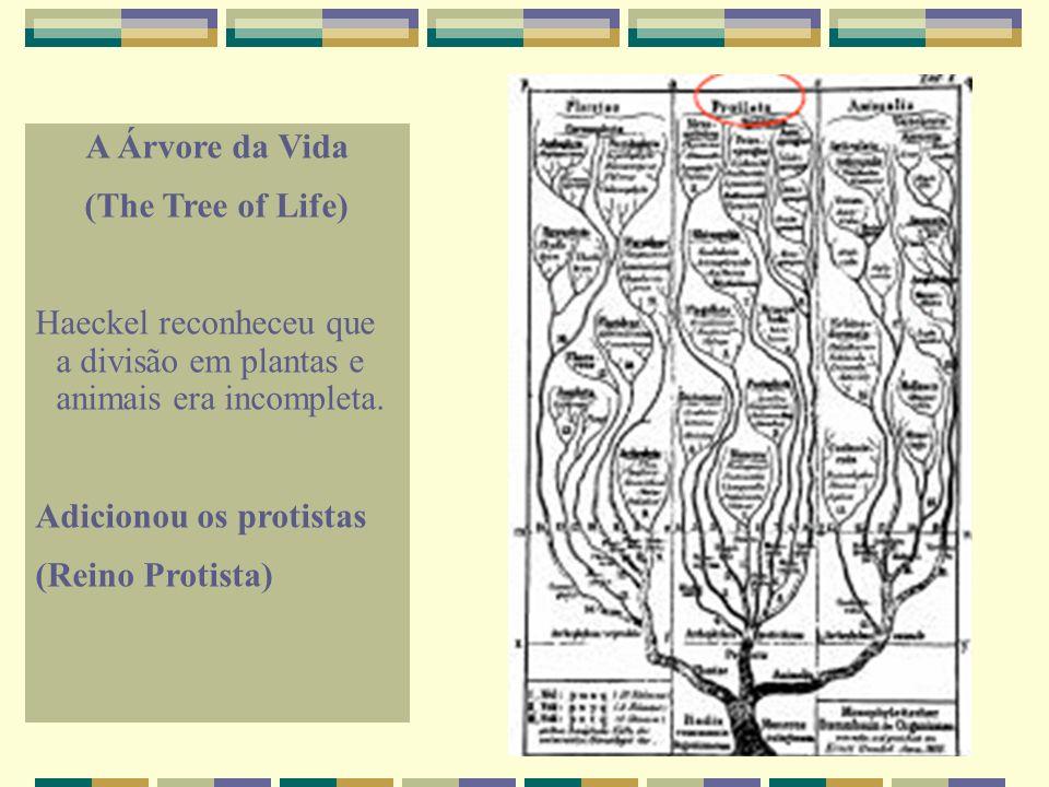 A Árvore da Vida (The Tree of Life) Haeckel reconheceu que a divisão em plantas e animais era incompleta.