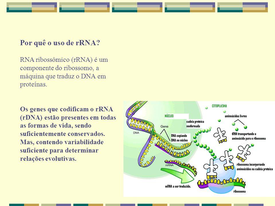 Por quê o uso de rRNA RNA ribossômico (rRNA) é um componente do ribossomo, a máquina que traduz o DNA em proteínas.