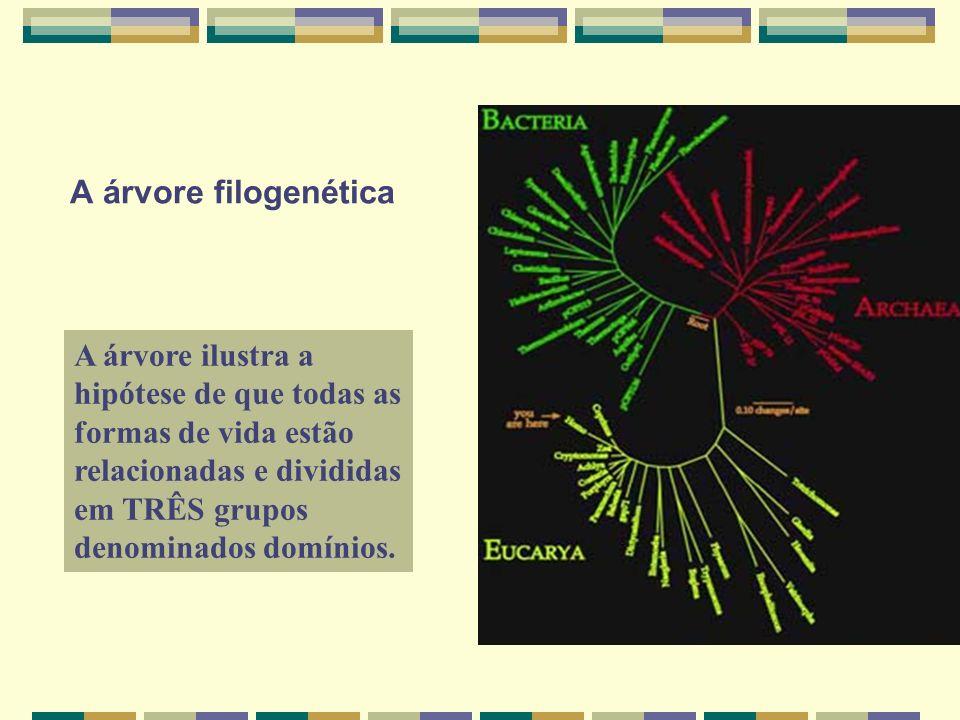 A árvore filogenéticaA árvore ilustra a hipótese de que todas as formas de vida estão relacionadas e divididas em TRÊS grupos denominados domínios.