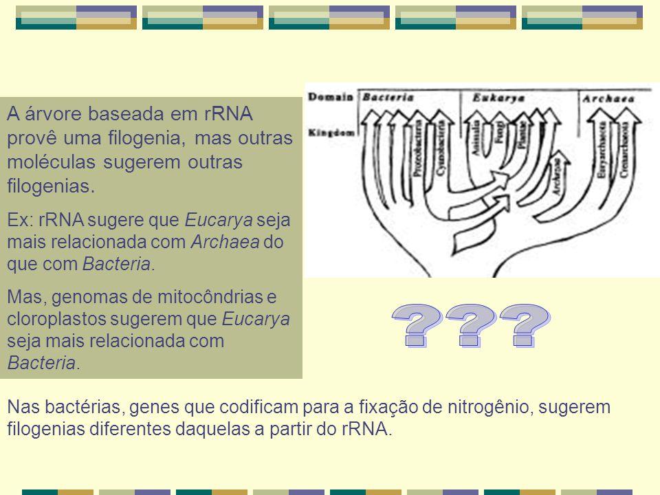 A árvore baseada em rRNA provê uma filogenia, mas outras moléculas sugerem outras filogenias.