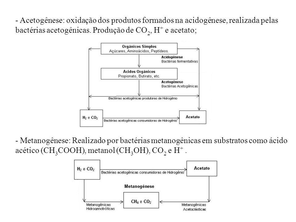 - Acetogênese: oxidação dos produtos formados na acidogênese, realizada pelas bactérias acetogênicas. Produção de CO2, H+ e acetato;