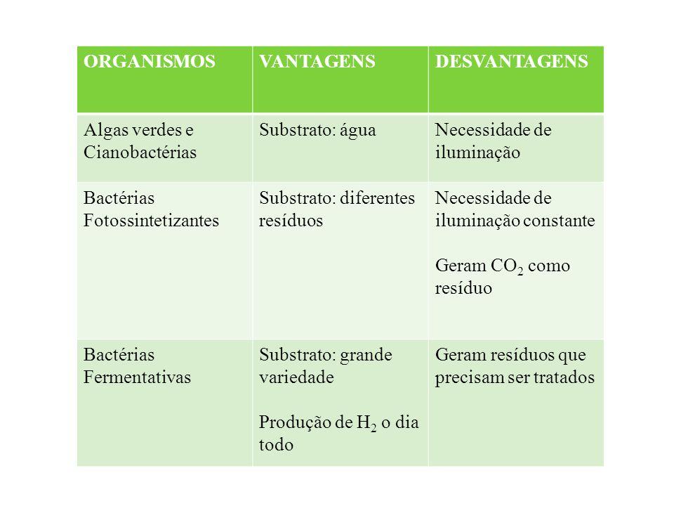 ORGANISMOS VANTAGENS. DESVANTAGENS. Algas verdes e Cianobactérias. Substrato: água. Necessidade de iluminação.